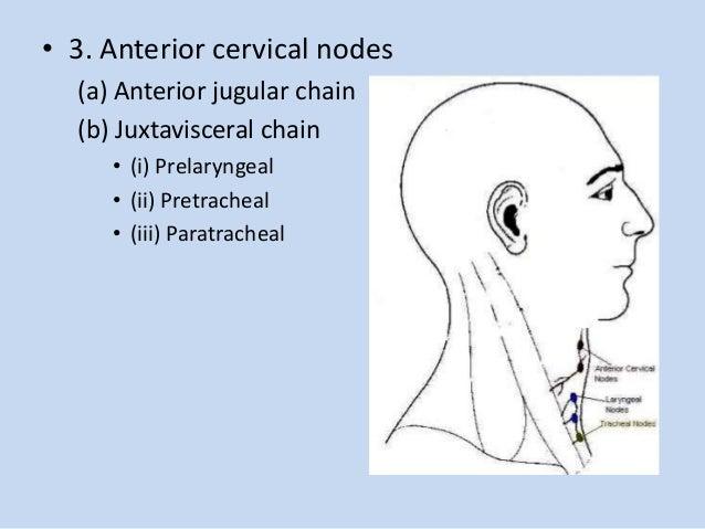 Cervical Lymphadenopathy Icd 9