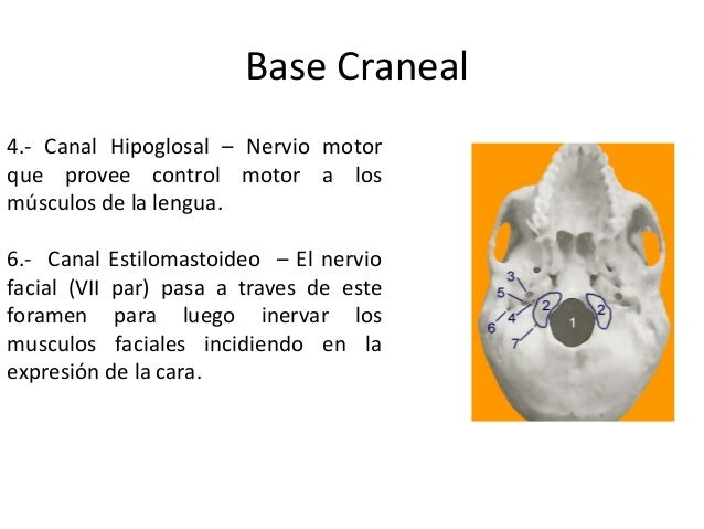 Manipulación Cervical Superior 2012 Slide 3