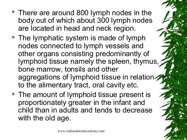 immune system and highly organized centers The thoracic duct lymph finally enters the venous system at  lymph sinuses highly organized system of  nodules may have germinal centers.