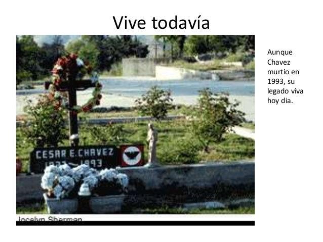 Vive todavía Aunque Chavez murtio en 1993, su legado viva hoy dia.