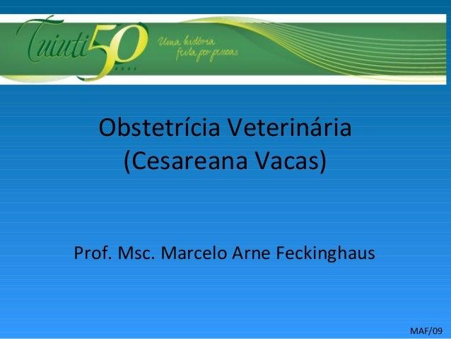 Obstetrícia Veterinária (Cesareana Vacas) Prof. Msc. Marcelo Arne Feckinghaus MAF/09
