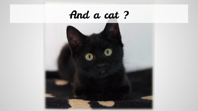 And a cat ?