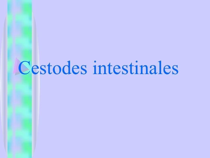 Cestodes intestinales