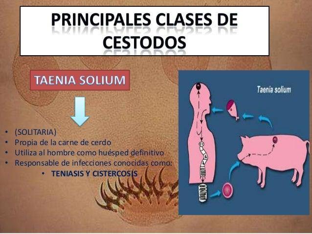 La aplicación de la raíz del amargón de los parásitos