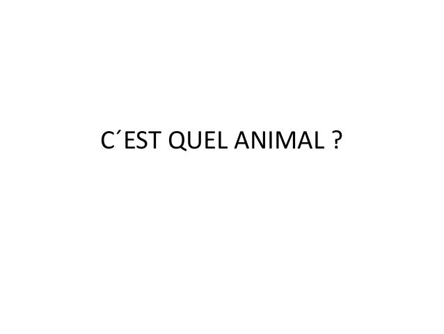C�EST QUEL ANIMAL ?