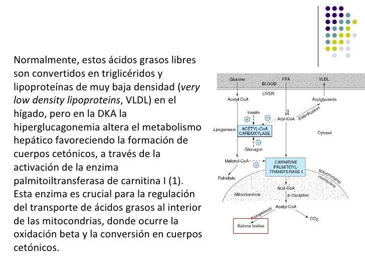 Normalmente, estos ácidos grasos libresson convertidos en triglicéridos ylipoproteínas de muy baja densidad (verylow densi...