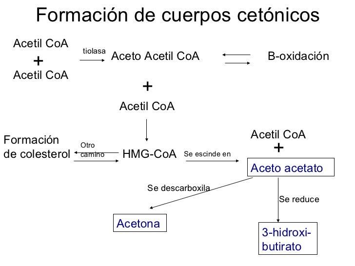 Cetogenesis.1654663818