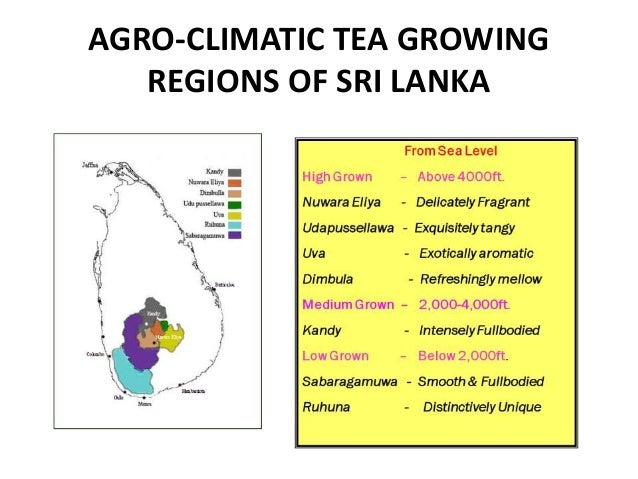 marketing mix for sri lankan tea Marketing plan for dilmah introduction dilmah which is one of sri lanka's strongest brand, both locally and internationally founded in 1988 by merrill j fernando, as mjf group of companies, he started with the passion and an objective to make tea a sustainable industry.