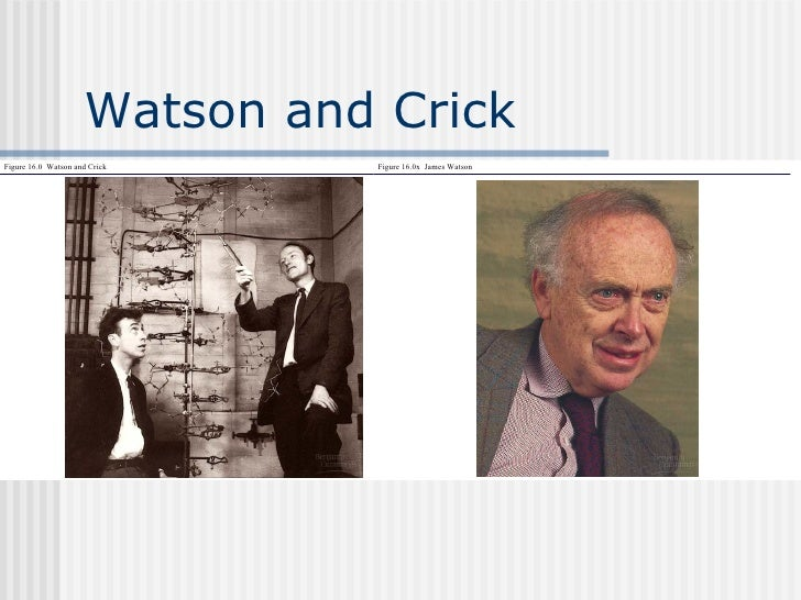 essay on watson and crick This lesson will review the watson & crick model of dna and how it applies to  our understanding of genetic material by the end you will understand.