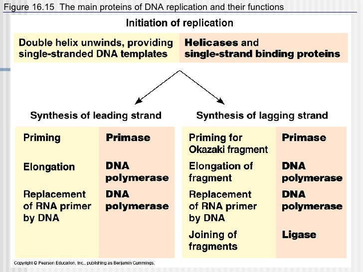 Short summary of protein synthesis