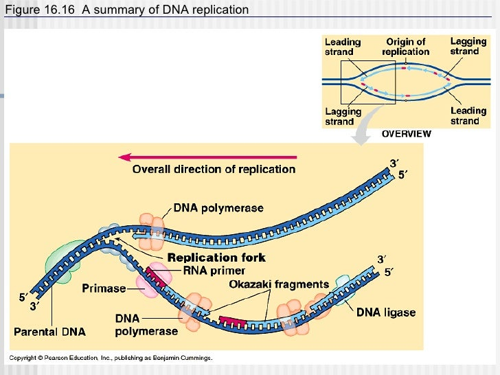 5 Dna Rna Protein Synthesis