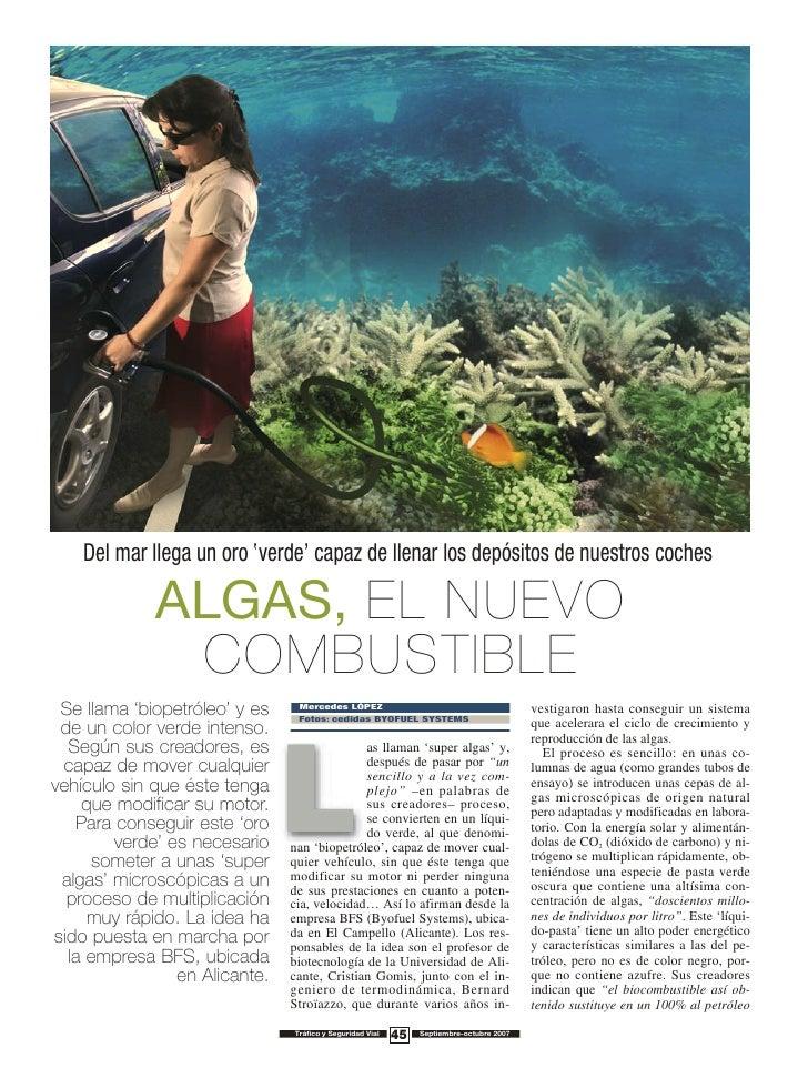 Del mar llega un oro 'verde' capaz de llenar los depósitos de nuestros coches               ALGAS, EL NUEVO               ...