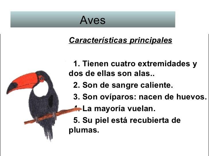Tipos de Animales y sus Caractersticas