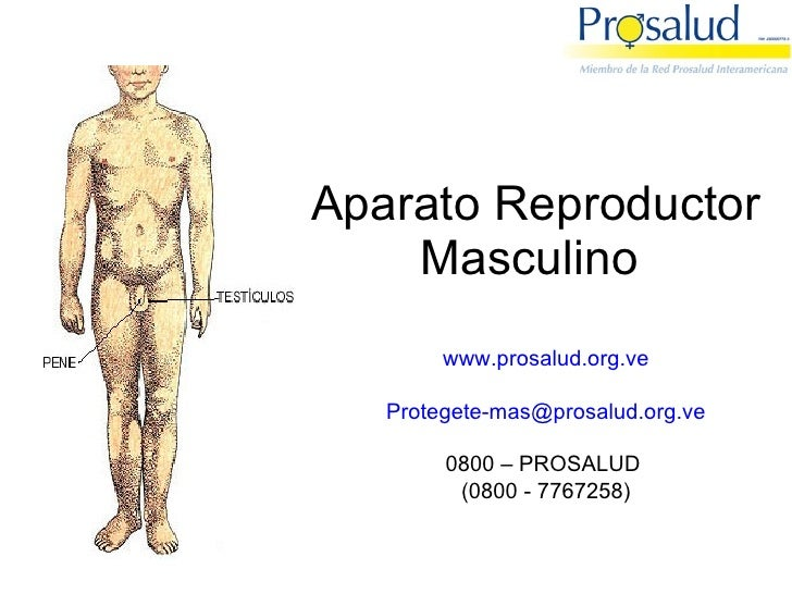 Aparato Reproductor Masculino  www.prosalud.org.ve [email_address] 0800 – PROSALUD  (0800 - 7767258)