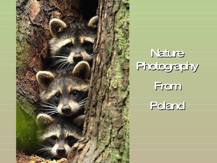 Nature Photography From Poland