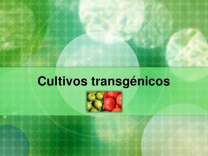 Cultivos transgénicos<br />