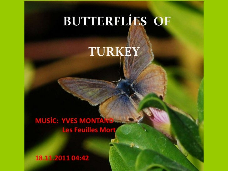BUTTERFLİES OF               TURKEYMUSİC: YVES MONTAND       Les Feuilles Mort18.11.2011 04:42