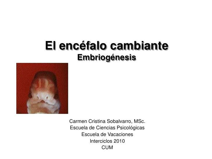 El encéfalo cambianteEmbriogénesis<br />Carmen Cristina Sobalvarro, MSc.<br />Escuela de Ciencias Psicológicas<br />Escuel...