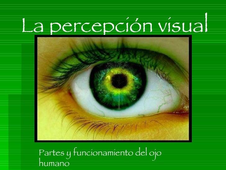 La percepción visual Partes y funcionamiento del ojo humano