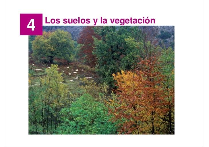GEOGRAFÍA                                    TEMA 4        Los suelos y la vegetación 4                                   ...