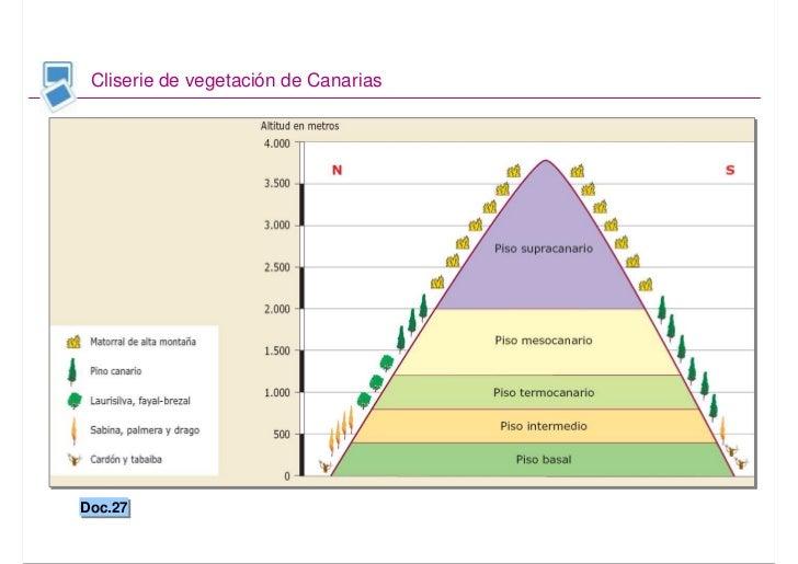 Geo2bach biogeograf a for Pisos de vegetacion canarias