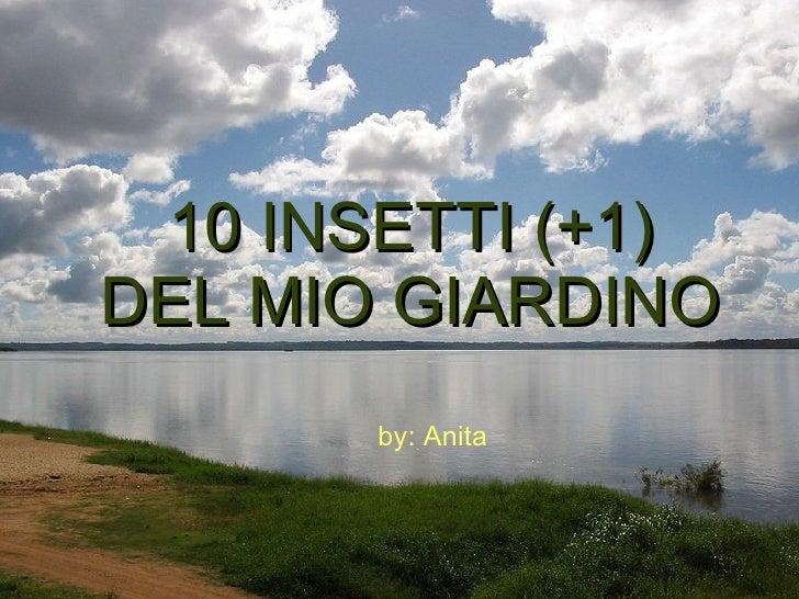 10 INSETTI (+1) DEL MIO GIARDINO by: Anita