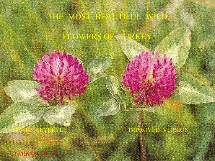 THE  MOST  BEAUTİFUL  WİLD FLOWERS OF  TURKEY 1-A MUSİC : SEYREYLE  IMPROVED  VERSİON  29/06/09   12:34