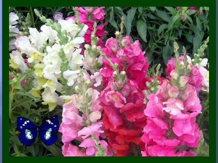 C fakepathles fleurs du soleil - Fleur du soleil ...