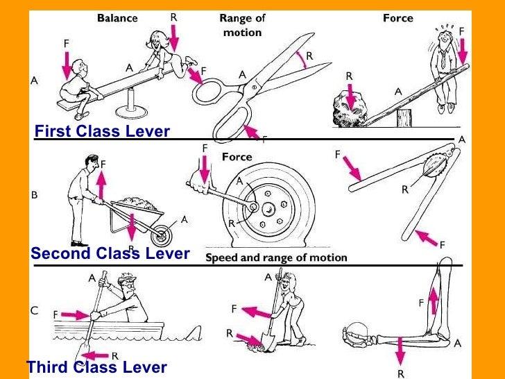 levers, Human body