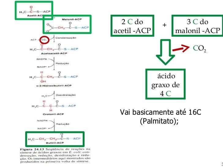Vai basicamente até 16C (Palmitato); 2  C  do acetil -ACP + 3  C  do malonil -ACP C O 2 ácido graxo de 4  C