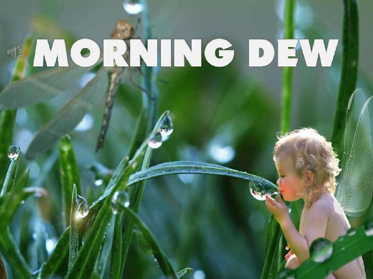 MORNING DEW<br />