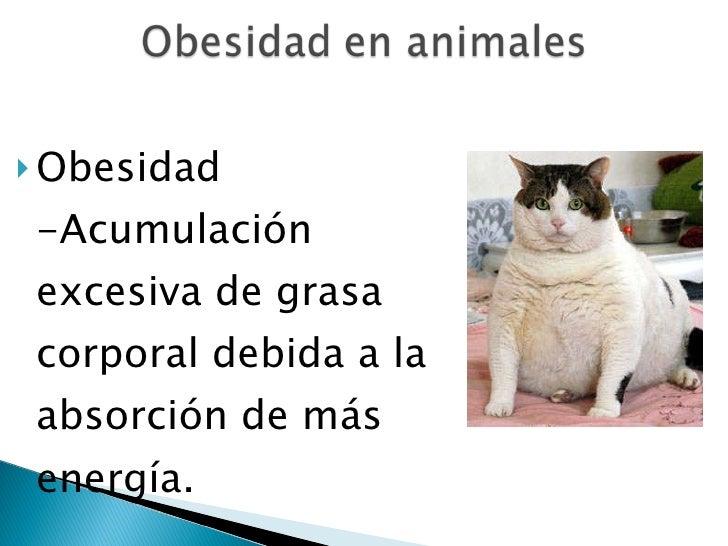 <ul><li>Obesidad -Acumulación excesiva de grasa corporal debida a la absorción de más energía.  </li></ul>