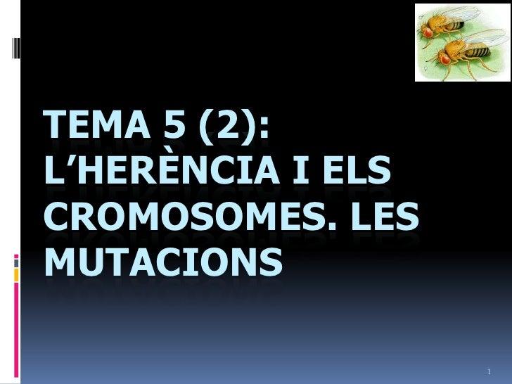 1<br />Tema 5 (2): L'herència i elscromosomes. Les mutacions<br />