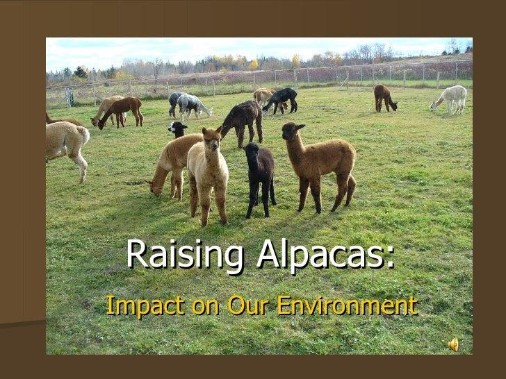 Raising Alpacas: Impact on Our Environment Test