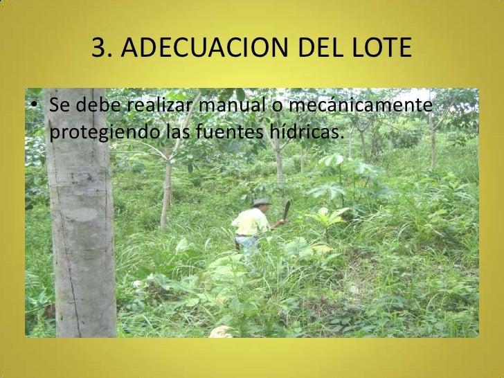 3. ADECUACION DEL LOTE<br />Se debe realizar manual o mecánicamente protegiendo las fuentes hídricas.<br />