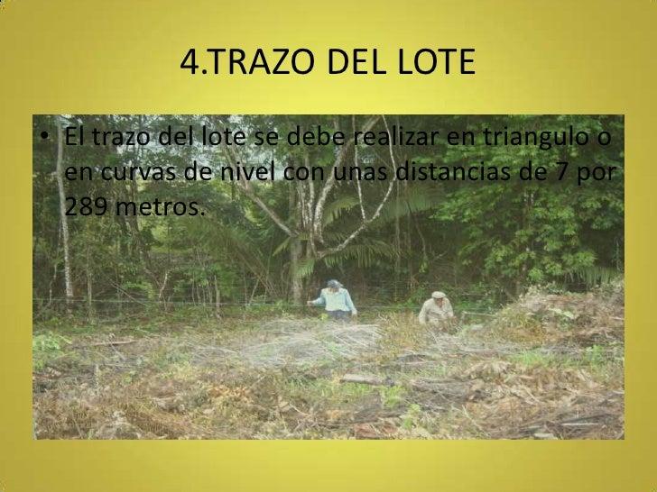 4.TRAZO DEL LOTE<br />El trazo del lote se debe realizar en triangulo o en curvas de nivel con unas distancias de 7 por 28...