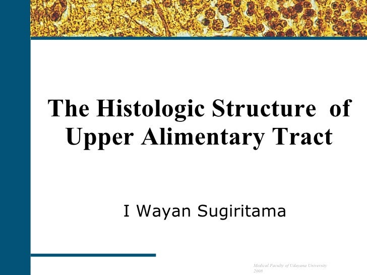 The Histologic Structure  of  Upper  Alimentary Tract I Wayan Sugiritama Medical Faculty of Udayana University 2008