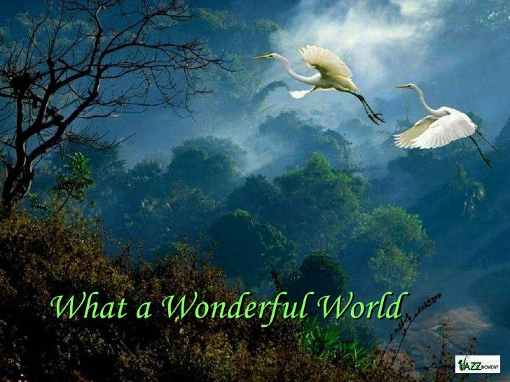 the wonderful world of nature What a wonderful world with david attenborough -- bbc one [full hd]  planet earth: amazing nature scenery (1080p hd) - duration: 13:29.