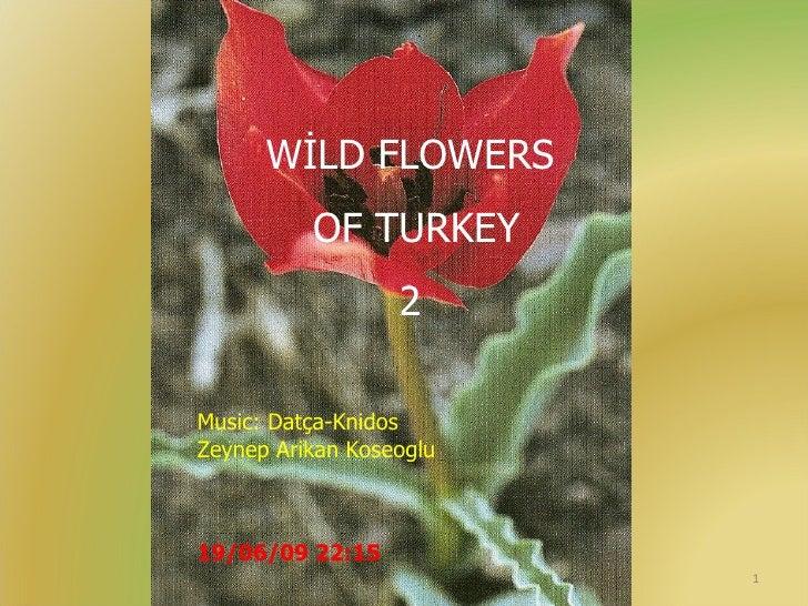 WİLD FLOWERS OF TURKEY 2 Music: Datça-Knidos Zeynep Arikan Koseoglu 19/06/09   22:14