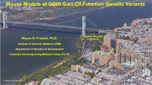Hammer Bldg IGM 4-5-6 floors Mouse Models of GRIN Gain-Of-Function Genetic Variants Wayne N. Frankel, Ph.D. Institute of G...