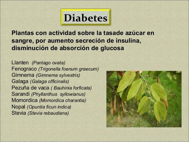 Plantas Medicinales y Calidad de Vida