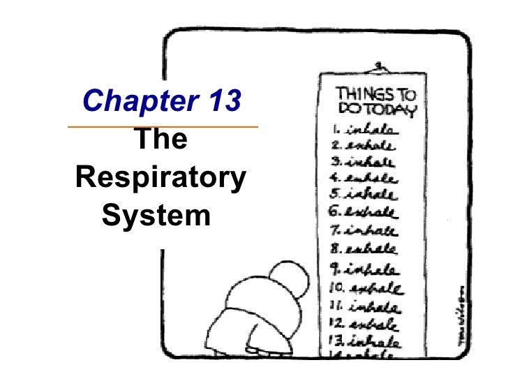 Chapter 13 The Respiratory System