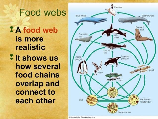 Example Venn Diagram Food Web Electrical Drawing Wiring Diagram