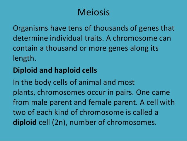 Meiosis Organisms have tens of thousands of genes that determine individual traits. A chromosome can contain a thousand or...