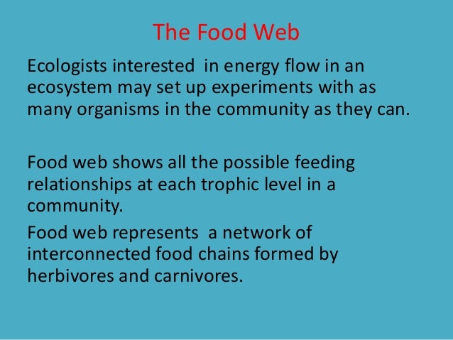 Organism In A Food Chain That Represents A Feeding Step