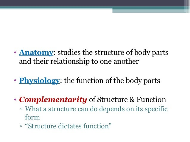 Anatomy Physiology Lecture Notes Ch 1 Introduction
