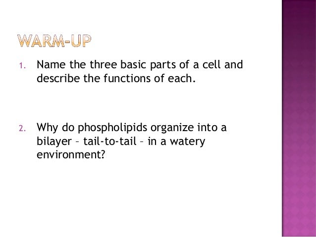 Anatomy & Physiology Lecture Notes - Ch  3 cells - part 2
