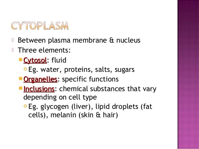 Anatomy & Physiology Lecture Notes - Ch. 3 cells - part 3