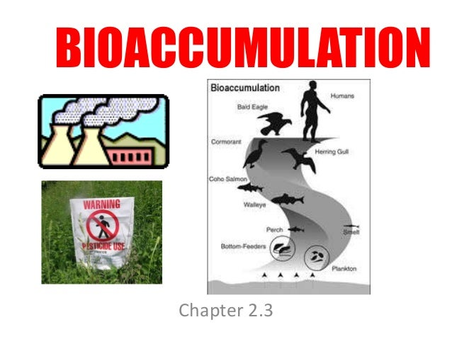 BIOACCUMULATION  Chapter 2.3