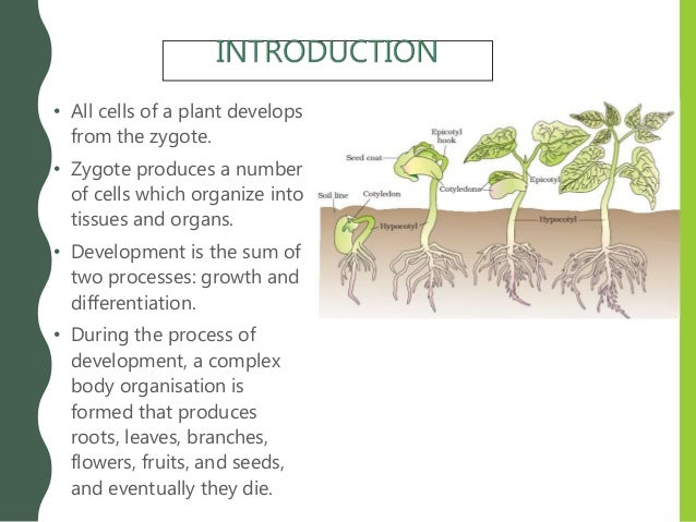 Chapter 15. Plant Growth and Development Slide 2